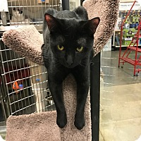 Adopt A Pet :: Andrew - Pittstown, NJ