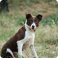 Adopt A Pet :: Rosie - Auburn, CA