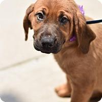 Adopt A Pet :: Sheila Ray - Frisco, TX