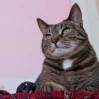 Adopt A Pet :: Denna - Bathurst, NB