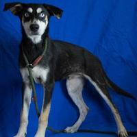 Adopt A Pet :: Hunter - Livingston, TX