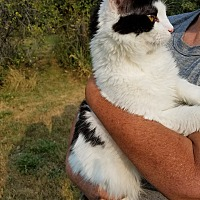 Adopt A Pet :: Azog - Cardwell, MT