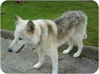 German Shepherd Dog Mix Dog for adoption in Haughton, Louisiana - Found in Highland