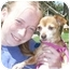 Photo 3 - Chihuahua/Dachshund Mix Dog for adoption in Carrollton, Texas - Amber