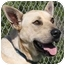 Photo 1 - German Shepherd Dog/Labrador Retriever Mix Dog for adoption in San Clemente, California - PEPPY = 949-595-8899