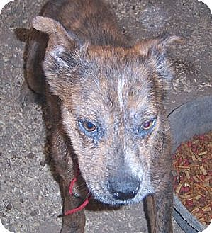 Terrier (Unknown Type, Medium) Mix Dog for adoption in Templeton, California - Baby Face