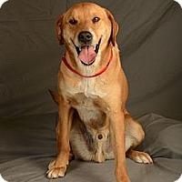 Adopt A Pet :: Rocky - Crescent, OK