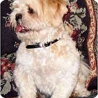 Adopt A Pet :: Princess Maggie - Mays Landing, NJ