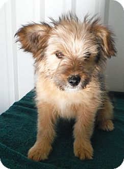 Terrier (Unknown Type, Small) Mix Puppy for adoption in McIntosh, New Mexico - Eidelwiese