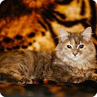 Adopt A Pet :: Martha - St. Louis, MO
