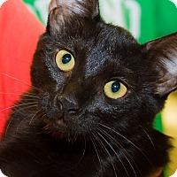 Adopt A Pet :: Willow - Irvine, CA