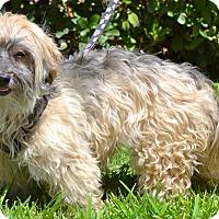 Adopt A Pet :: Starla - Simi Valley, CA