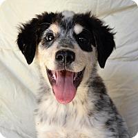 Adopt A Pet :: *Earl - PENDING - Westport, CT