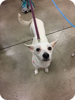 Terrier (Unknown Type, Small) Mix Dog for adoption in Fort Myers, Florida - Fancy