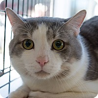 Adopt A Pet :: Roadrunner - New York, NY