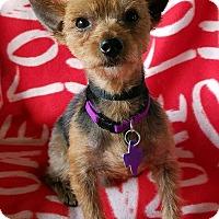 Adopt A Pet :: Goku - San Antonio, TX