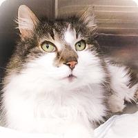 Adopt A Pet :: Charlie - Webster, MA