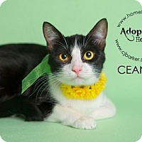 Adopt A Pet :: Ceanna - Houston, TX