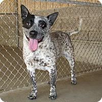 Adopt A Pet :: Scout - Ruidoso, NM