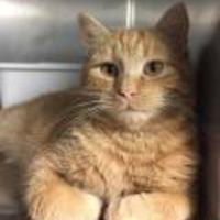 Adopt A Pet :: Clark - Wellsville, NY