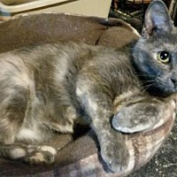 Adopt A Pet :: Raindrop ADULT FEMALE - Morehead, KY