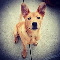 Adopt A Pet :: Gavin - Keyport, NJ