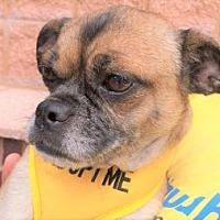 Adopt A Pet :: Zoey - Durham, NC