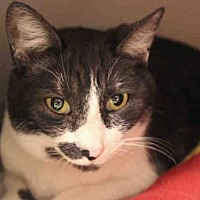 Adopt A Pet :: SISSY - Fort Wayne, IN