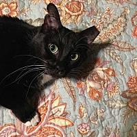 Adopt A Pet :: Precious Anne  CP:Lisa - Dallas, TX