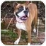 Photo 1 - Boxer Dog for adoption in Tallahassee, Florida - Darielle