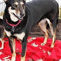Adopt A Pet :: Tilly - Gilbert, AZ