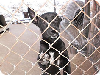 Labrador Retriever Mix Puppy for adoption in Wallaceburg, Ontario - Bubbles