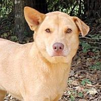 Adopt A Pet :: Zane - The Woodlands, TX