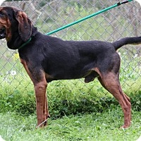 Adopt A Pet :: Duke - Baltimore, MD