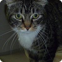 Adopt A Pet :: Frank - Hamburg, NY