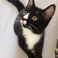 Adopt A Pet :: Kamryn - Youngsville, NC