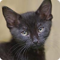 Adopt A Pet :: Maggie - Alameda, CA