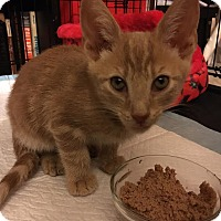 Adopt A Pet :: Trooper - Waldorf, MD
