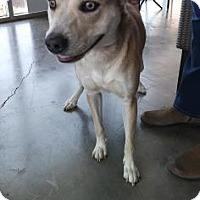 Adopt A Pet :: Kelly - Santa Paula, CA