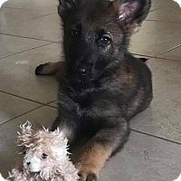 Adopt A Pet :: Rocky - Jupiter, FL