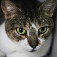 Adopt A Pet :: Laurel - Stray - Wilkes Barre, PA
