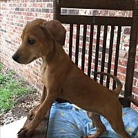 Adopt A Pet :: Onia - Southington, CT