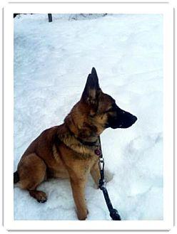 German Shepherd Dog Dog for adoption in Colville, Washington - Oofa