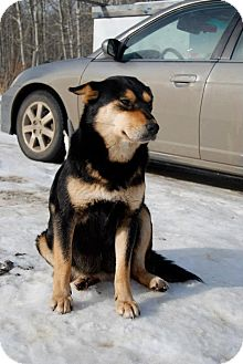 Shepherd (Unknown Type) Mix Dog for adoption in Spruce Grove, Alberta - Valentina