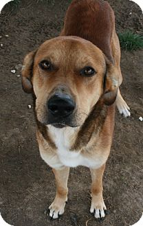 Shepherd (Unknown Type) Mix Dog for adoption in Pilot Point, Texas - JED