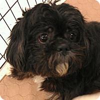 Adopt A Pet :: Popeye - Phoenix, AZ