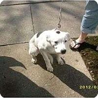 Adopt A Pet :: Diamond - Palmyra, WI