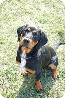 Rottweiler/Doberman Pinscher Mix Dog for adoption in Minot, North Dakota - Elka