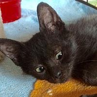 Adopt A Pet :: Templeton - Tampa, FL