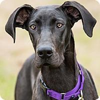 Adopt A Pet :: Nova - Dacula, GA